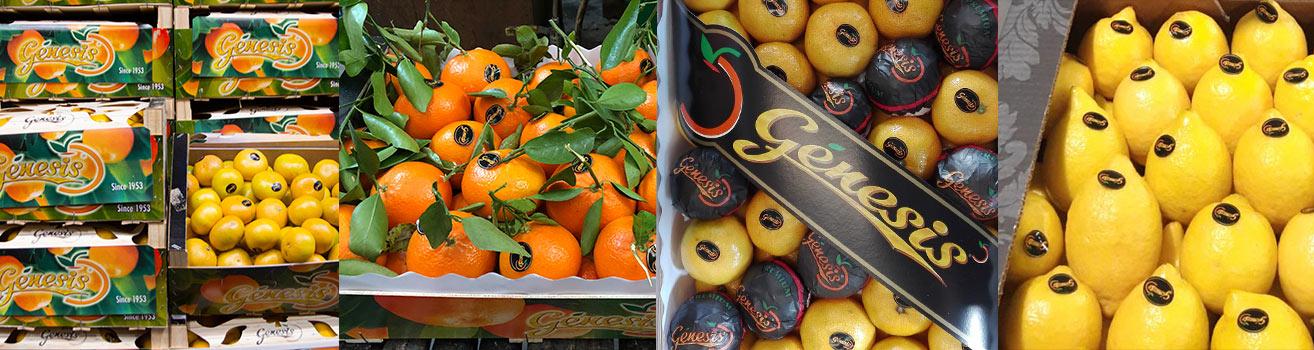 genesis-citrus