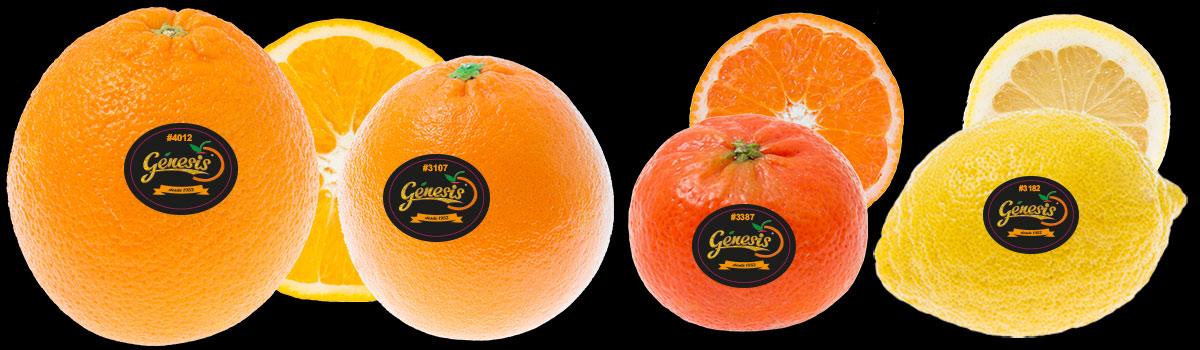 plu-stickers-citrus